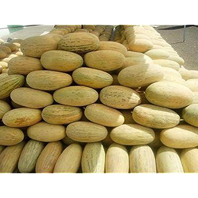 Melon Seeds Torpedo Uzbekistanskaya Ukraine Heirloom Vegetable Seeds : Garden & Outdoor