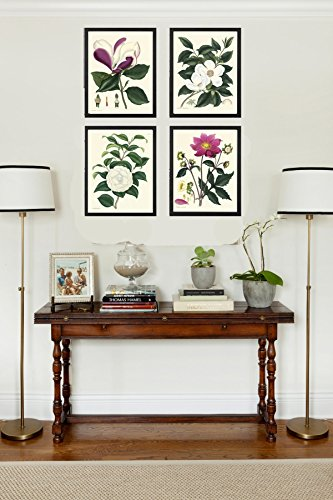 Botanical Print Set of 4 Antique Beautiful Andrews Large Magnolia Pink Red White Canellia Garden Nature Plant Flowers Home Room Decor Wall Art Unframed