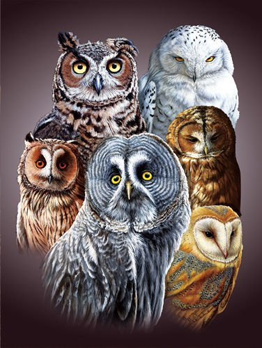 TripStan 3D Home Wall Art Decor Lenticular Pictures, Owls Collection Holographic Flipping Images, 12x16 inches Animal Poster Painting, Without Frame, Cute Owls -