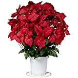 Red Poinsettias Sale