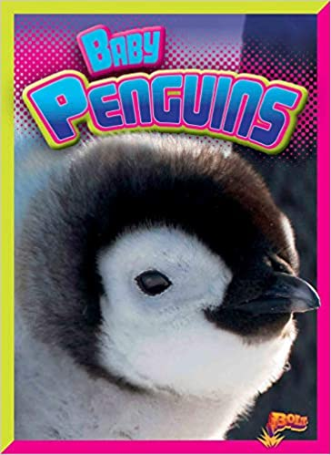 Baby Penguins Adorable Animals Deanna Caswell
