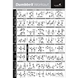 NewMe Fitness Dumbbell Workout Exercise Poster - Laminated - Strength Training Chart - Build Muscle, Tone & Tighten - Home Gym Weight Lifting Routine - Body Building Guide w/Free Weights