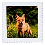3dRose Sven Herkenrath Animals - A Fox In The Woods Portrait Animal Fox - 18x18 inch quilt square (qs_262457_7)