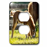 3dRose Danita Delimont - Baby animals - Baby Miniature horse colt along side of mare. - Light Switch Covers - 2 plug outlet cover (lsp_278882_6)