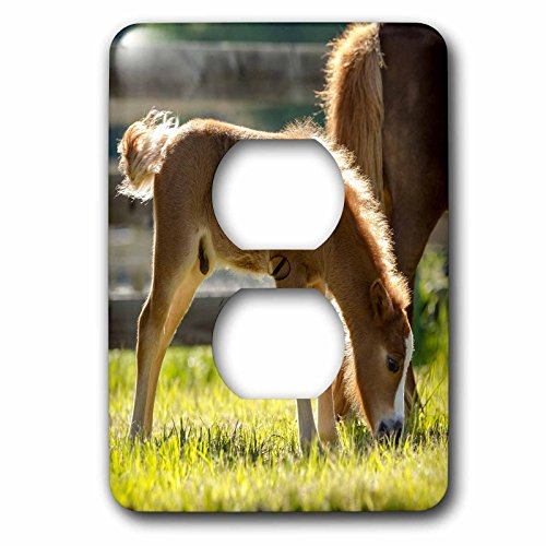 3dRose Danita Delimont - Baby animals - Baby Miniature horse colt along side of mare. - Light Switch Covers - 2 plug outlet cover (lsp_278882_6) by 3dRose
