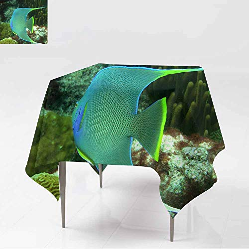 AFGG Washable Square Tablecloth,Bermuda Angelfish,for Events Party Restaurant Dining Table Cover,50x50 - Seersucker Bermuda