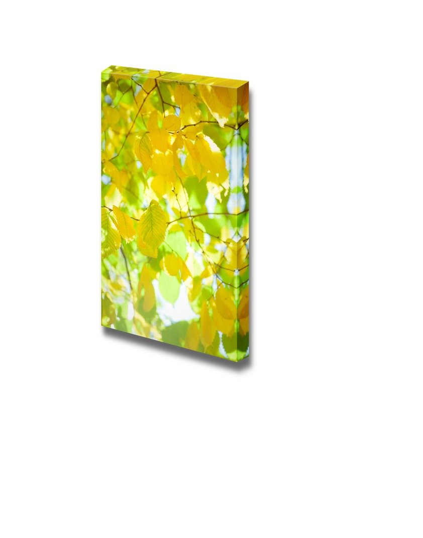 Yellow Autumn Leaves on the Tree with Sunlight Wall Decor ation ...