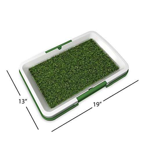 Dog Pee Resistant Grass Uk