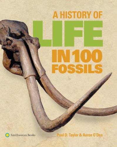A History of Life in 100 Fossils - Natural History Museum Fossils