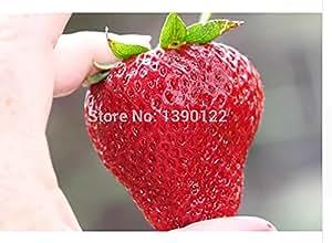 The best seller 1000pcs Germany super big strawberry seeds,fruit seeds, garden supplies,bonsai seeds gaint strawberry plant pot for home garden