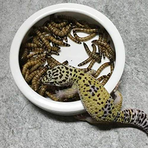 Slson Reptile Feed Feeder Food Or Water Ceramics Bowl Tray Worm Anti Escape Dish Mealworm Dish