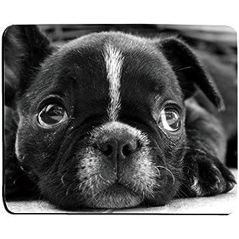 Amazon Com Urdesigner Personalized French Bulldog Puppies With