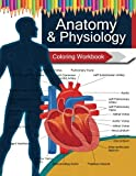 img - for Anatomy & Physiology Coloring WorkBook Books book / textbook / text book