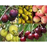 Special Deal - Grow Your own Fruit Trees Offer - Five Different Trees