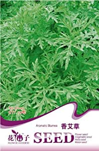 Sweet Seeds Semillas de Wormwood, el paquete original 50pcs Jardín Bonsai fragante hierbas medicinales, Fácil Grow La artemisa