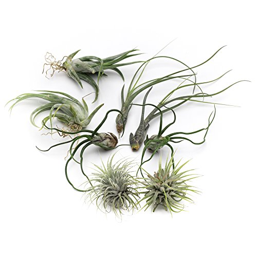 makerskit-butzii-live-air-plant-collection-set-of-eight-free-organic-plant-food-pod