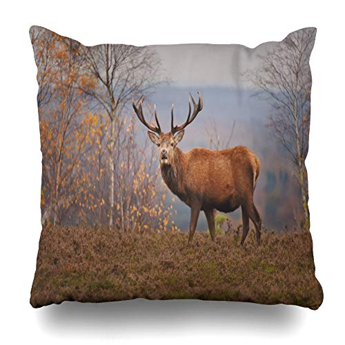 (KJONG Deer Autumn Day Animal Autumn Autumn Autumn Colors Autumn Day Beautiful Square DecorativePillow Case 18 x 18inch Zippered Pillow Cover for Bedroom Living Room(Two Sides Print))
