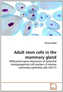 Adult Stem Cells Show Anti-Aging Potential