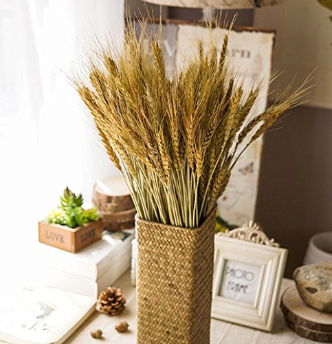 YSBER 100 PCS Dried Branch Wheat &Drying of Natural Wheat Stem For Christmas Natural Wedding Home Office Decor  (Wheat)