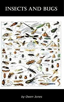 Insects and Bugs (How To...) by [Jones, Owen]