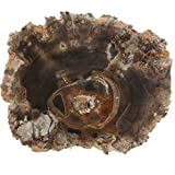 "PETRIFIED WOOD SLAB, Polished Fossilized Stone Tree Specimen From Madagascar, Medium 2 1/2""-4"" Size"