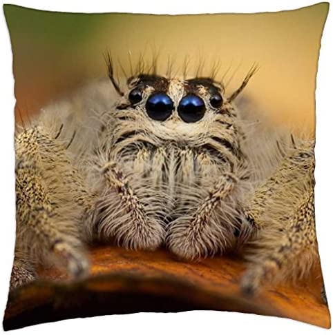 Amazon Com Very Hairy Spider Throw Pillow Cover Case 18 X 18 Home Kitchen