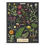 Cavallini Papers & Co. Herbarium 1,000 Piece