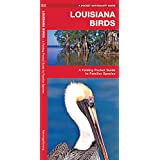 Louisiana Birds: A Folding Pocket Guide to Familiar Species (A Pocket Naturalist Guide)