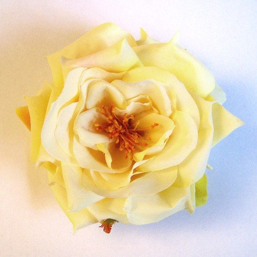 Light Yellow Garden Roses - 6