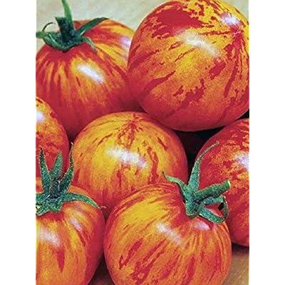 Seeds Vegetable Organic Tomato Amur Tiger ERA from Ukraine 0.15 Gram : Garden & Outdoor