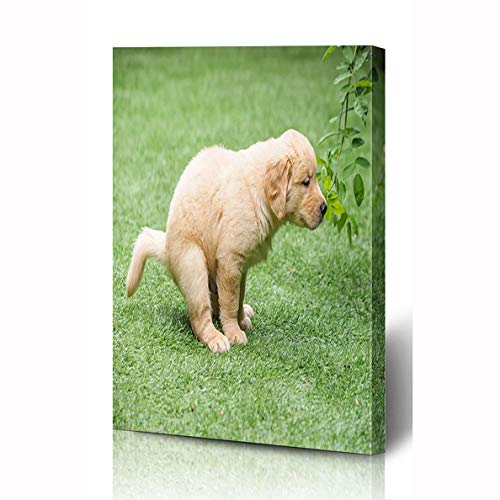 Ahawoso Canvas Prints Wall Art 12x16 Inches Stand Yellow Baby Cute Golden Retriever Puppy Pooping Dog Shit Adorable Arch Canine Color Toilet Wooden Frame Printing Home Living Room Office Bedroom