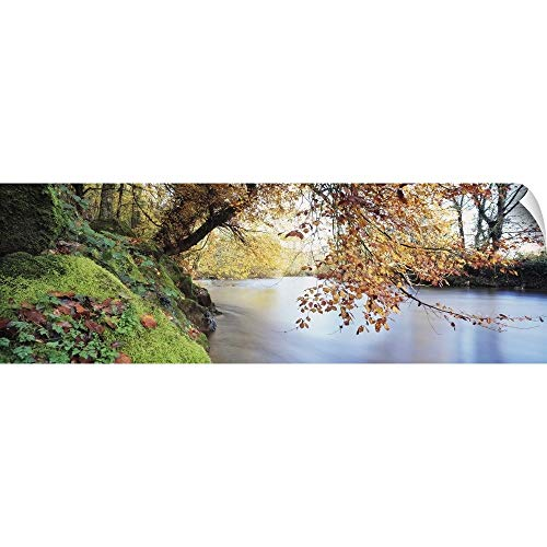 (CANVAS ON DEMAND Trees Along a River, River Dart, Bickleigh, Mid Devon, Devon, England Wall Peel Art Print, 48