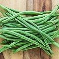 Tendergreen Green Bean Seeds, 50+ Premium Heirloom Seeds, Fantastic Addition to Your Home Garden! Bush Bean, (Isla's Garden Seeds), Non GMO, 85-90% Germination Rates, Seed