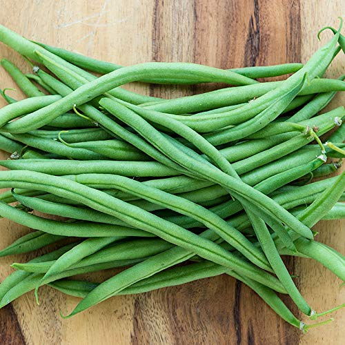 (Tendergreen Green Bean Seeds, 50+ Premium Heirloom Seeds, Fantastic Addition to Your Home Garden! Bush Bean, (Isla's Garden Seeds), Non GMO, 85-90% Germination Rates, Seed)