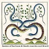 Buyenlarge 0-587-29760-3-C2030 Snakes of Surinam