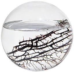 EcoSphere Closed Aquatic Ecosystem, Large Sphere
