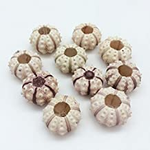 PEPPERLONELY 10PC Sputnik Sea Urchins Sea Shells (1 Inch ~ 1-1/4 Inch)