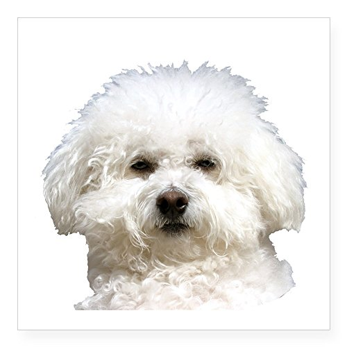 - CafePress Fifi The Bichon Frise Rectangle Sticker Square Bumper Sticker Car Decal, 3