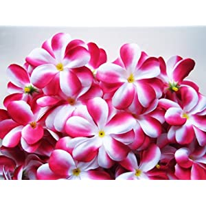 "(100) Hot Pink White Hawaiian Plumeria Frangipani Silk Flower Heads - 3"" - Artificial Flowers Head Fabric Floral Supplies Wholesale Lot for Wedding Flowers Accessories Make Bridal Hair Clips Headbands Dress 7"