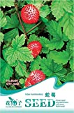 Portal Cool Original Package 50 Indian Mock Strawberry Seeds Duchesnea Indica B088