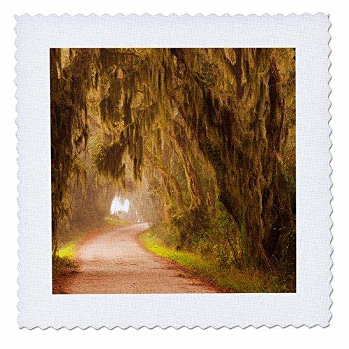 - 3dRose Danita Delimont - Roads - Moss draped trees along Laurel Hill Drive, Savannah NWR, Georgia - 22x22 inch quilt square (qs_259207_9)