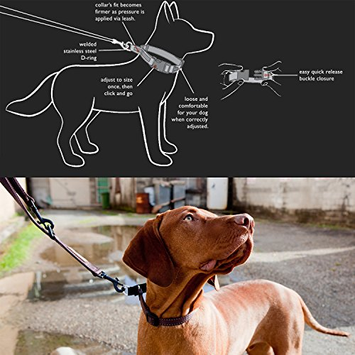Image of EzyDog Checkmate Martingale-Style Premium Nylon Safety Training and Correction Dog Collar - Quick-Clip Buckle and Reflective Stitching - Easy Control with no Choking Effect (Large, Candy)