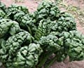 David's Garden Seeds Spinach Bloomsdale Abundant D67107 Heat Tolerant (Green) 200 Organic Seeds