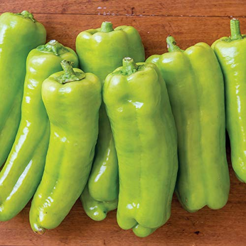 (Burpee Long Tall Sally' Hybrid Sweet Italian Roasting Green Peppers 3 Live Plants | 2 1/2