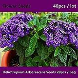 Best Quality - Bonsai - ^^Xiang Shui Cao Heliotropium Arborescens ^^^^ 40pcs, Cherry Pie Bonsai Flower ^^^^, Has A Special Aroma Garden Heliotrope ^^^^ - by SeedWorld - 1 PCs