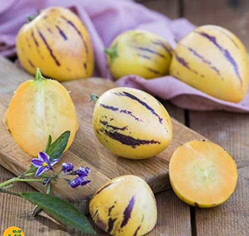 Soteer Seed House - 100 unidades exóticas semillas de pera de melón Mini Sugar Melon Gmo Fruta orgánica Frutas Semillas Casa Bonsai Planta para jardín Balcón/Patio