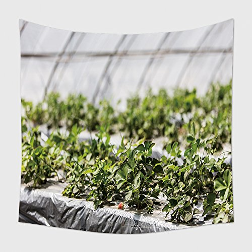 Home Decor Tapestry Wall Hanging Greenhouse Grow Strawberries Increase Income For Farmers Strawberry Industry Base In Beijing 645800650 For Bedroom Living Room Dorm
