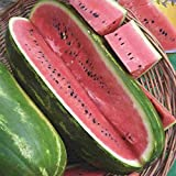 Jubilee Sweet Watermelon Seeds, 75+ Premium Heirloom Seeds,Giant Long Watermelons full of Flavor!, Popular & Top Seller!, (Isla's Garden Seeds), Non Gmo Organic, 85% Germination Rates, Highest Quality