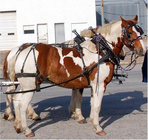 Amish Made Biothane Draft Horse Team Harness