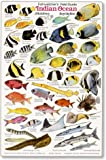 INDIAN OCEAN: Fishwatchers Fish Guide for Maldives, Seychelles, Kenya